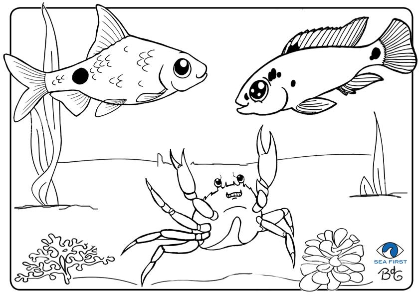 Kleurplaten Dieren In Het Water.Kleurplaten Sea First Foundation Kids