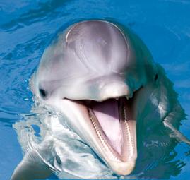 Over Dolfijnen Sea First Foundation Kids