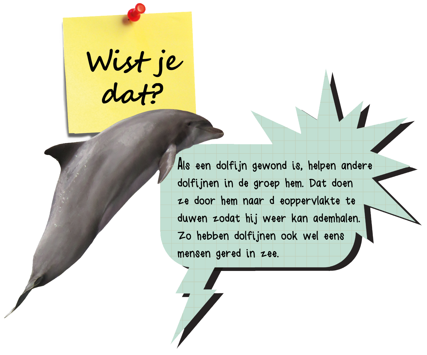 Kleurplaten Dolfijnen Dolfinarium.Over Dolfijnen Sea First Foundation Kids